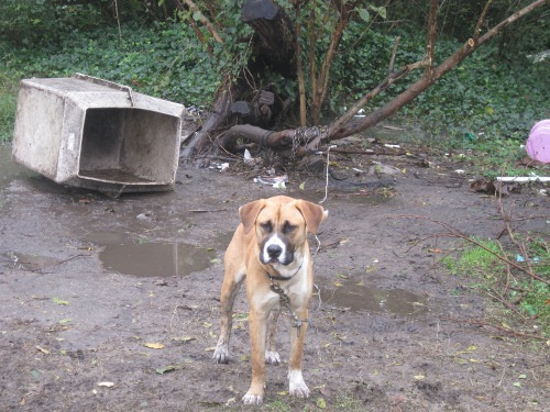 Help Dogs Before the Next Disaster Strikes