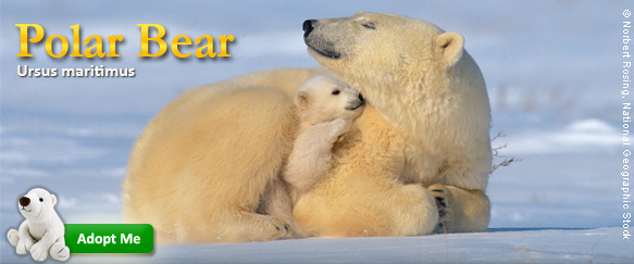 Protect Polar Bear Dens.