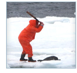 Help Stop the Bloody Seal Slaughter
